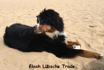 Flash Lübsche Trade